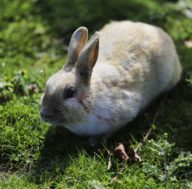 Bunny daze event in Langley on Whidbey Island